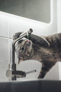 Een kat drinkt uit een kraan