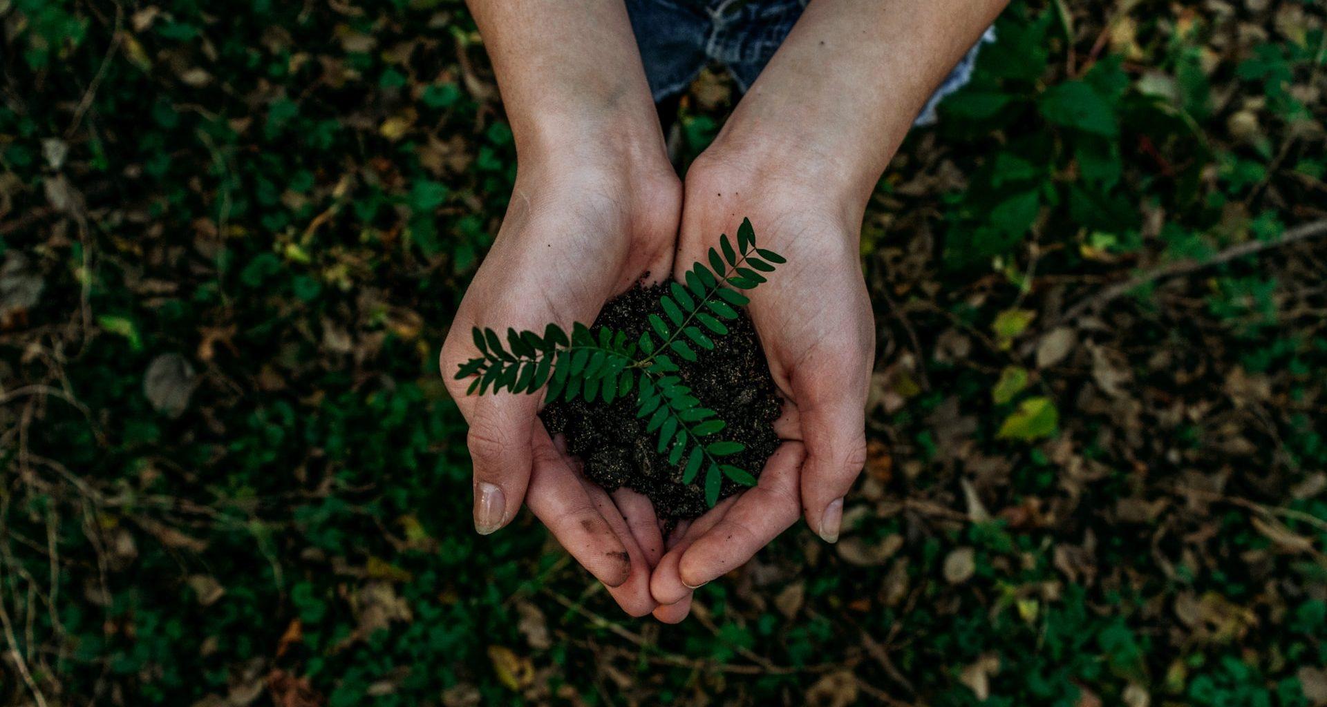 Handen houden kleine plant vast